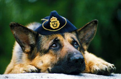 polishund2_47310d